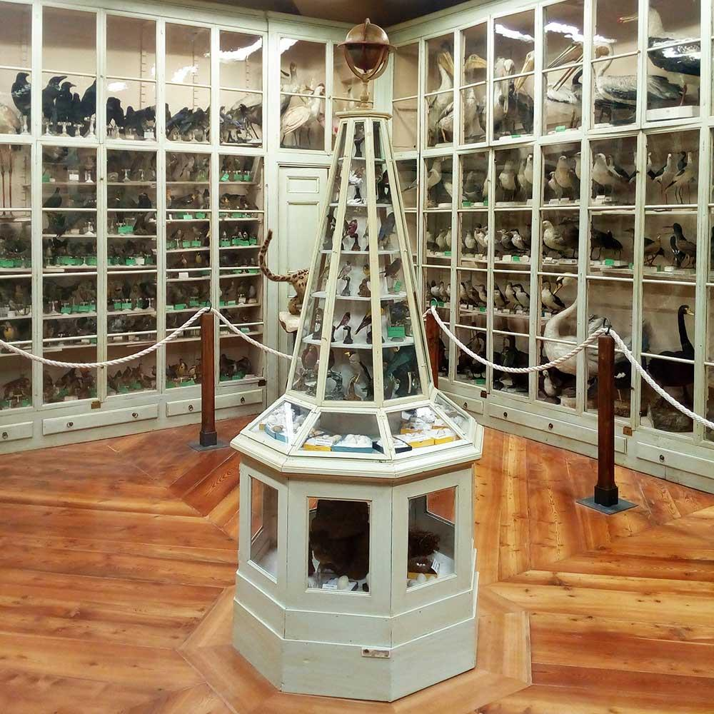 ORNITHOLOGICAL COLLECTIONS
