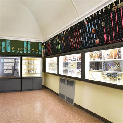 Museo Craveri